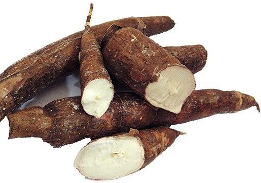 Transgenic Cassava